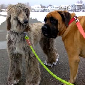 Dog Friendly Salt Lake City Hikes