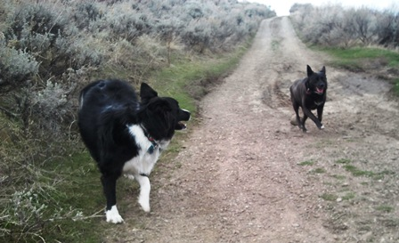 Off Leash Dog Hikes in Salt Lake and Davies
